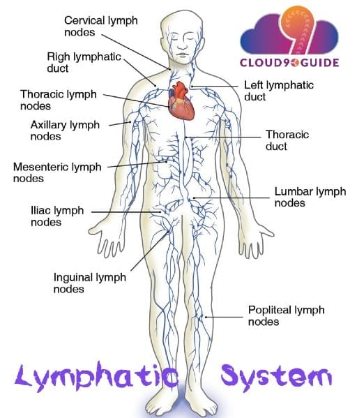 Manual Lymphatic Drainage Massage & Diabetes Benefits - Cloud 9 Guide